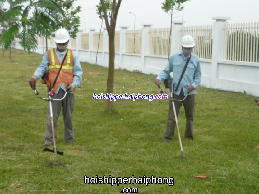 Dịch vụ cắt cỏ tận nơi giá rẻ nhất tại Hải Phòng